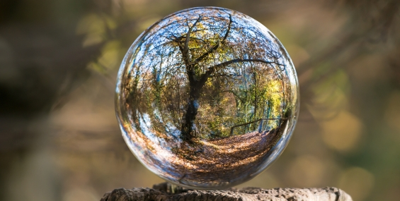 Bubble-reflecting-forest-CROP