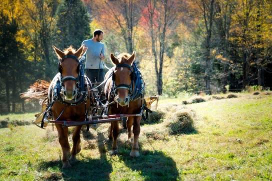 Horse-Powered Farming