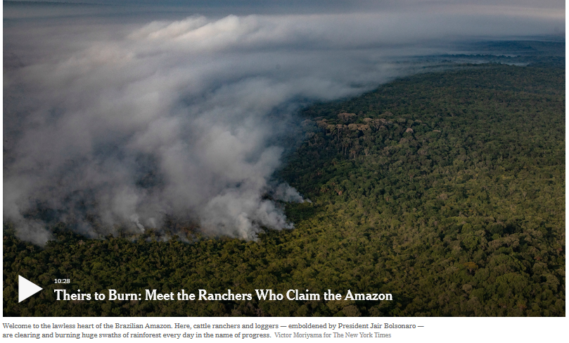 Amazon fires and cattle