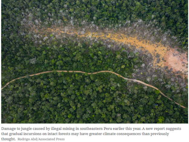 forest damage - Peru
