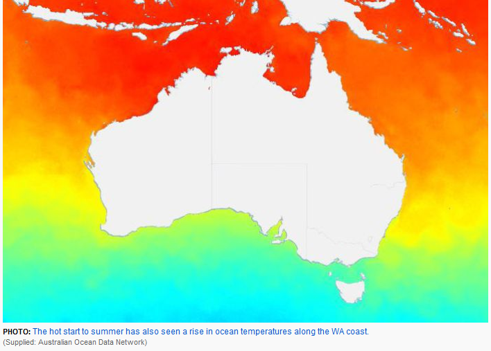 boiling down under