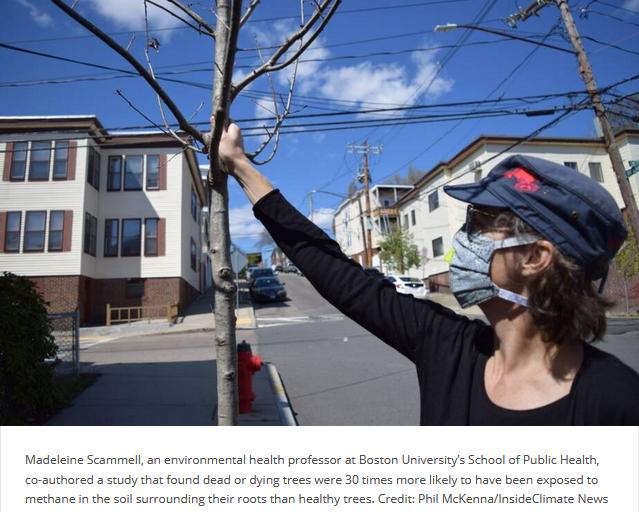 gas leaks kill trees