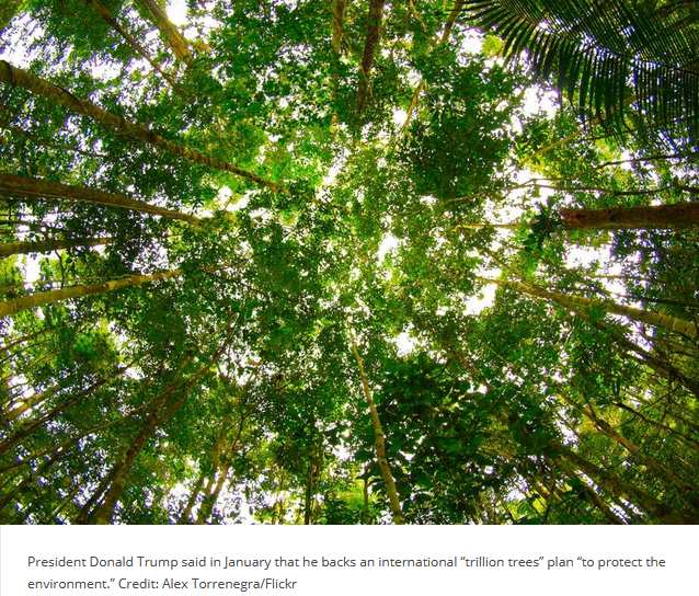 trillion tree diversion