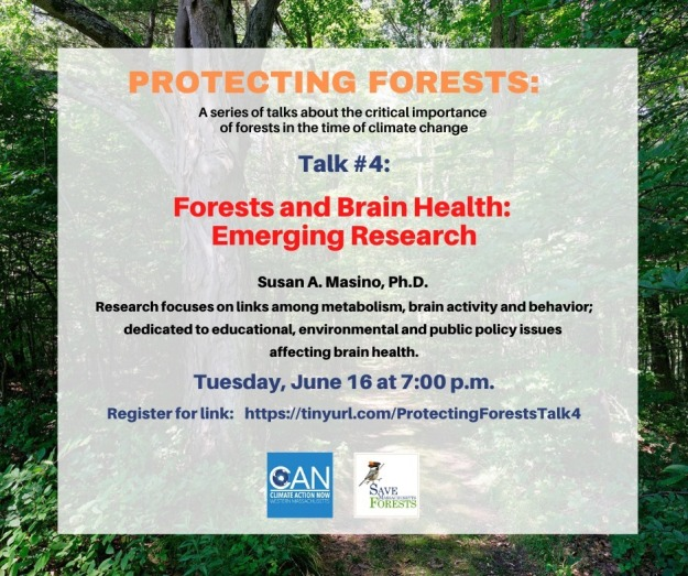 protecting forests talk 4