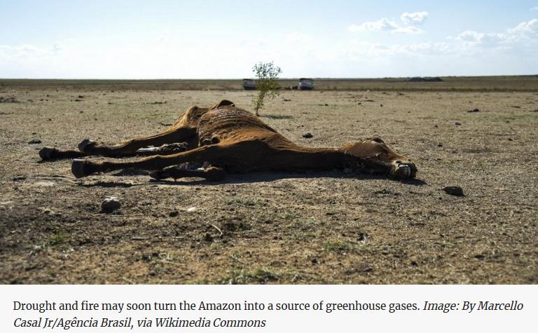 Amazon collapse