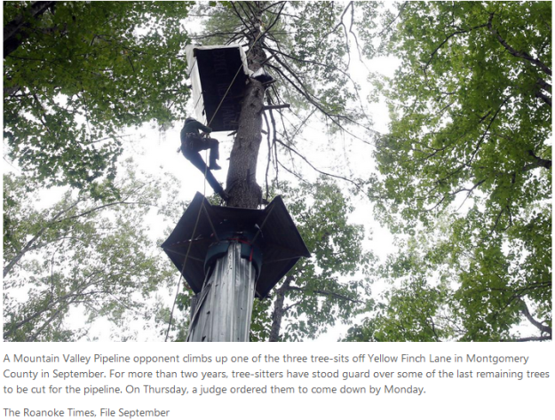 tree-sitters face removal order