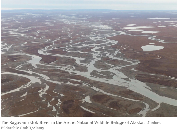 ANWR seismic survey dead